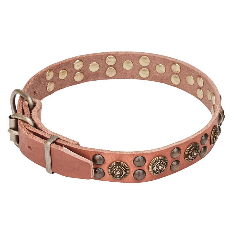 Collier original pour chien bouledogue fran ais style - Collier pour chien original ...